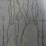 イラストのポイントを一気におさえるのは難しい。先に大まかな人体を把握しよう