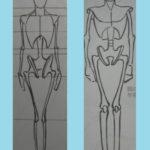 男女の人体模型の比較と女性の身体の描き方のコツ